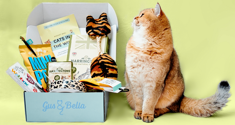 cats in the wild gus and bella cat treat box
