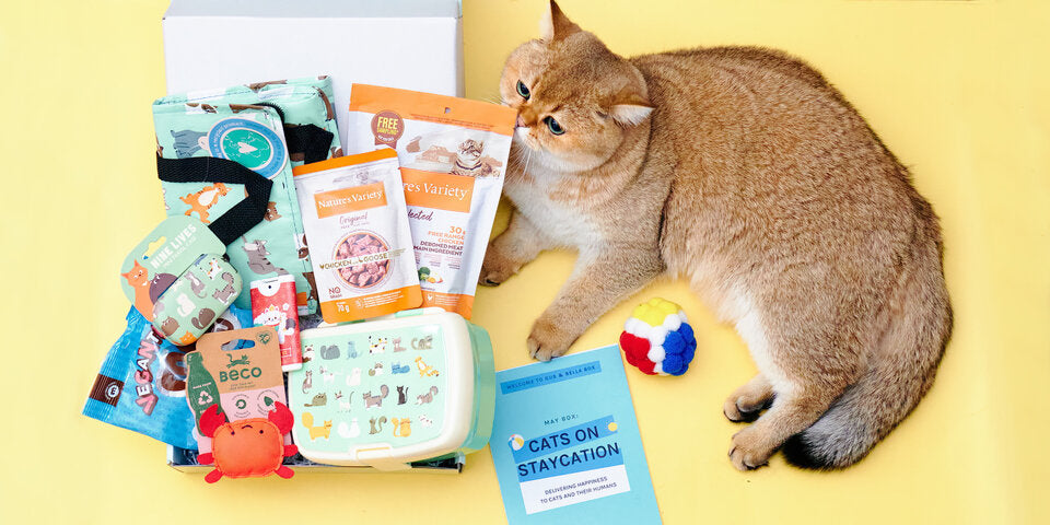 Cats on staycation May cat subscription box