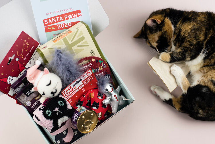 Santa Paws Gus & Bella cat subscription box