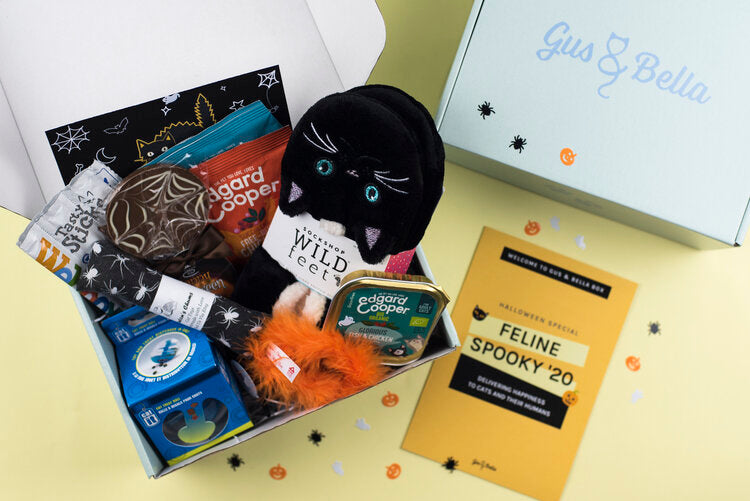 Feline spooky gus and bella cat subscription box