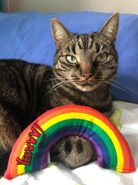 tabby brown cat with a rainbow shaped toy