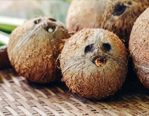 Featured ingredient Coconut shell powder