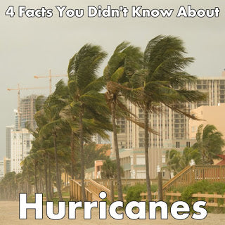 Palm Trees Being Blown by Hurricane