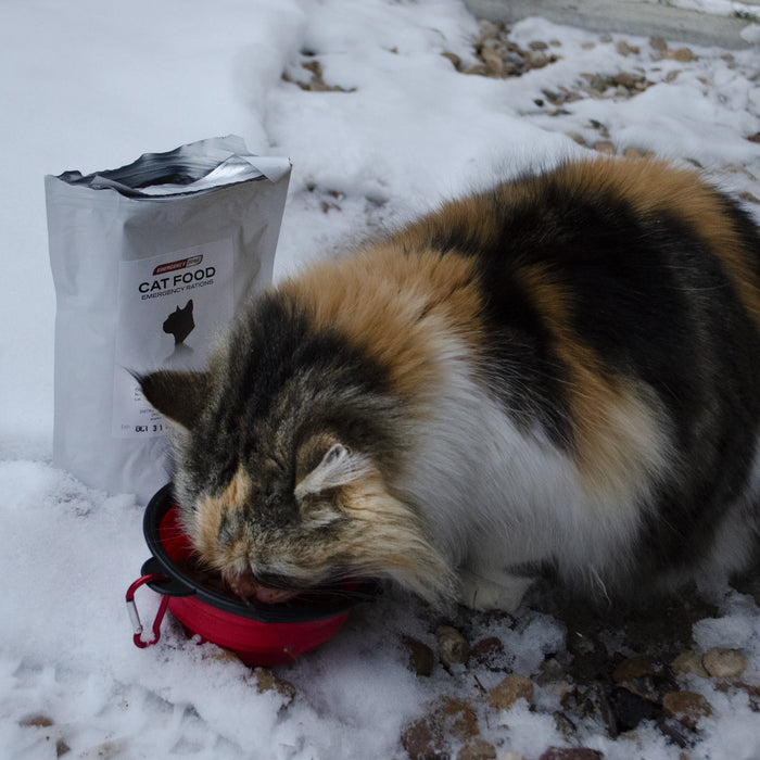 Basic Cat Emergency Kit