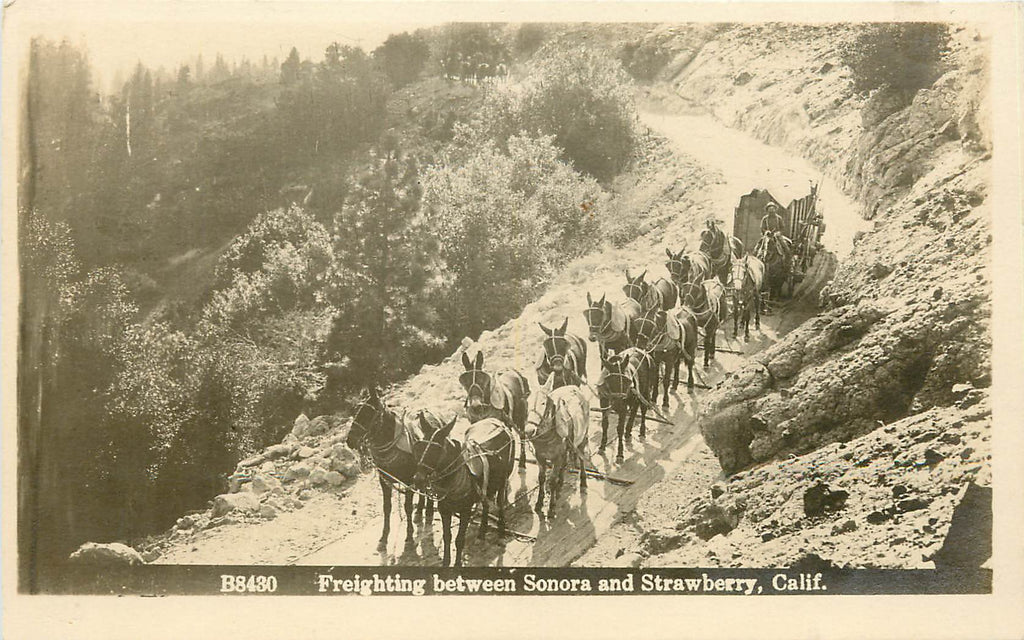 California - Freighting Between Sonora and Strawberry - Mule Horse Team - RPPC