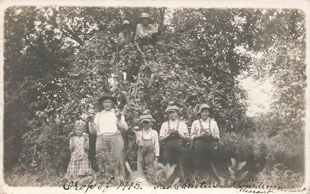 Pleasant Plains - IL - Illinois - Apple crop 1915 - Fred Christen - RPPC