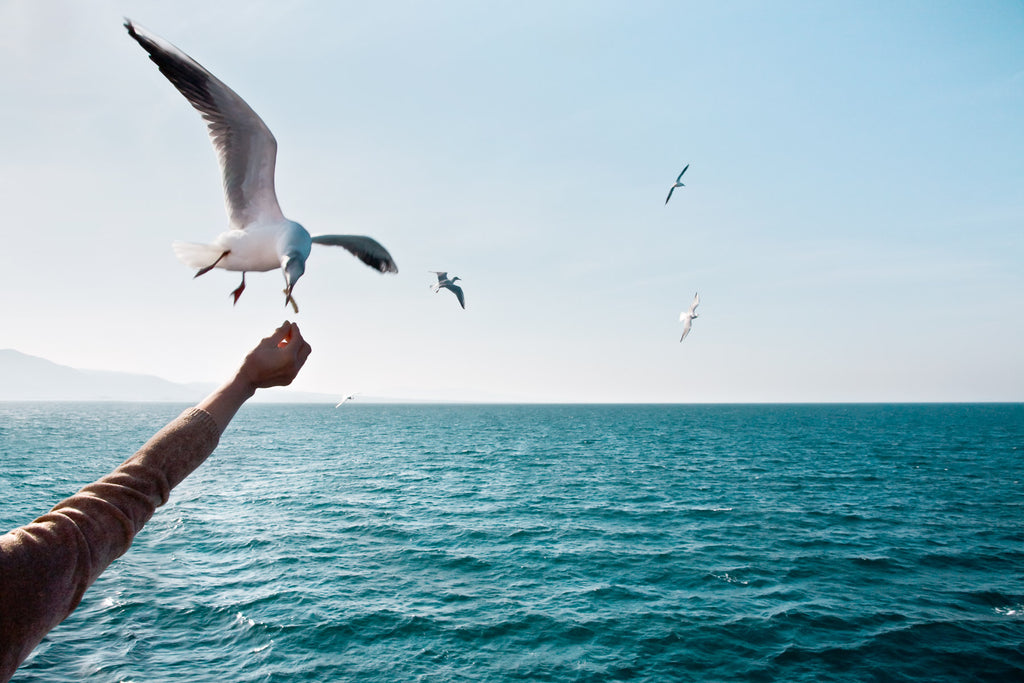 Feeding Seagulls on a ferry journey in Kyushu