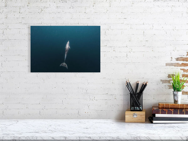 Bottlenose Dolphin Wall Art Print