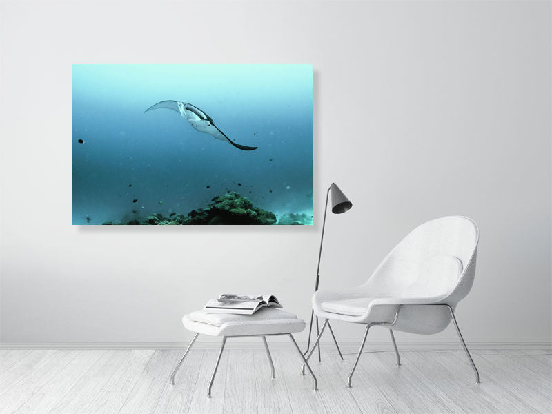 Wall Art Print of a Manta Ray