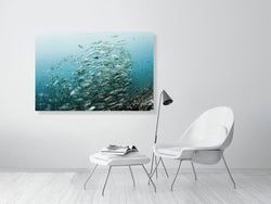 Wall Art Print of schooling fish