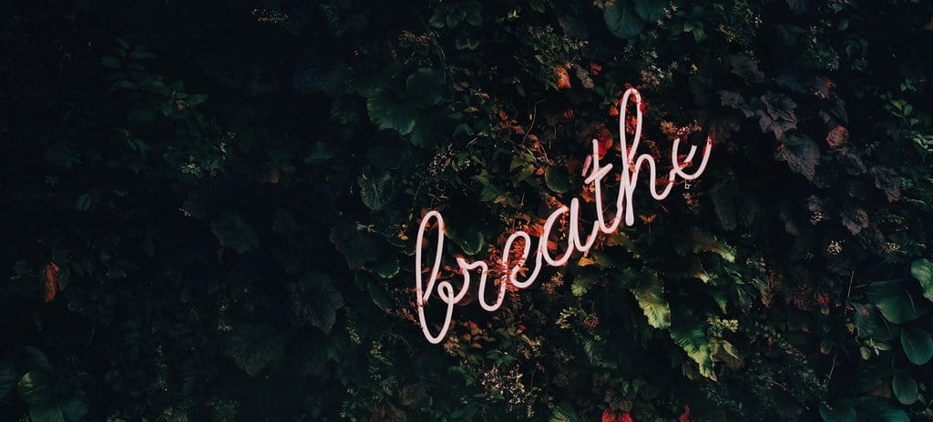 "Neon sign lit with the words ""breathe"" on a green foliage wall"
