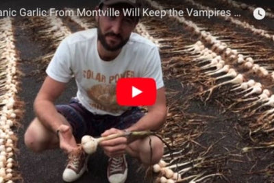 Garlic from the lush hills of Montville.