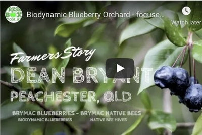 Biodynamic blueberry orchard increases its Organic Matter levels by 500%