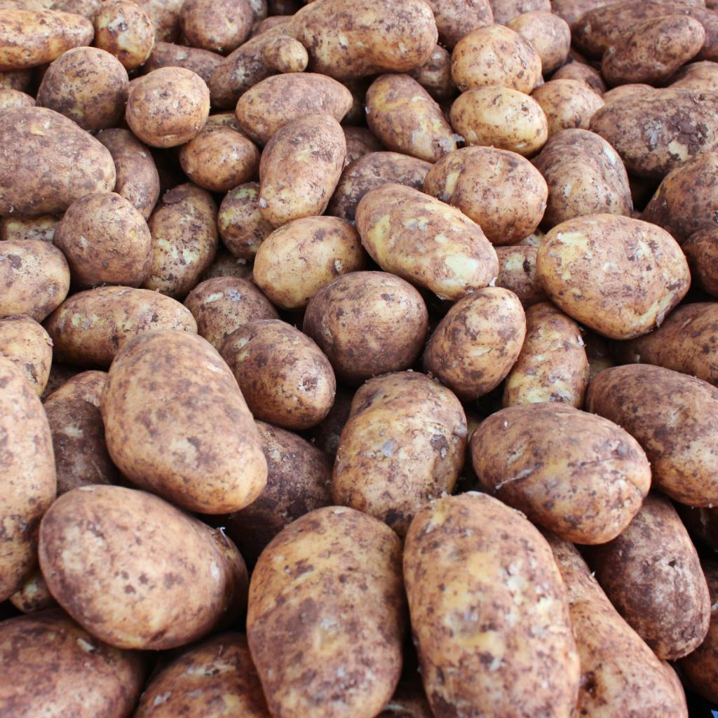 Organic Potato Dutch Cream 1kg