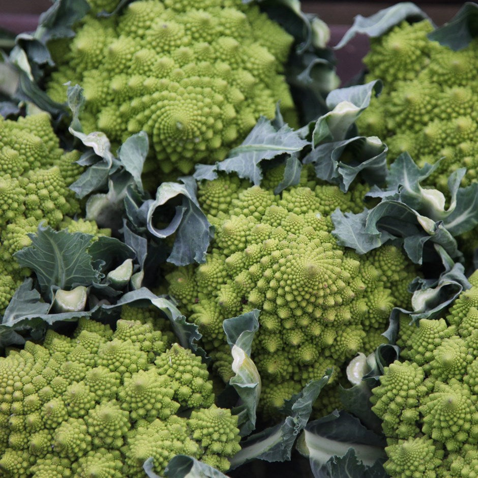 Organic Cauliflower Romanesque