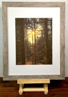 """sun through pines"""