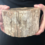 Natural Petrified Wood Fossil Specimen Healing Home Decor