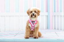 Load image into Gallery viewer, Tie Dye Adjustable Dog Harness