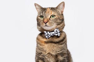 Wild Cat Collar and Bow Tie