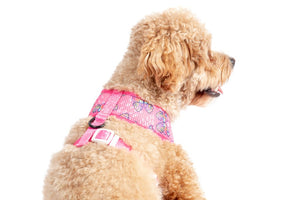 Flutterly Fab Classic Harness