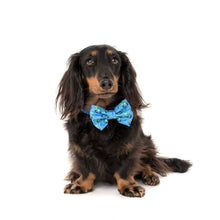 Load image into Gallery viewer, Rawr Collar and Bow Tie