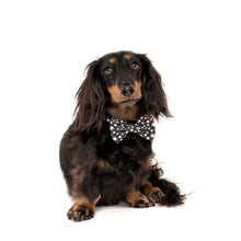 Load image into Gallery viewer, Shoot For The Stars Collar and Bow Tie