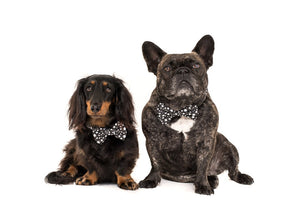 Shoot For The Stars Collar and Bow Tie