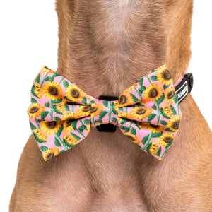 You Are My Sunshine Collar and Bow Tie