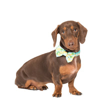 Load image into Gallery viewer, Fine-apple Collar and Bow Tie