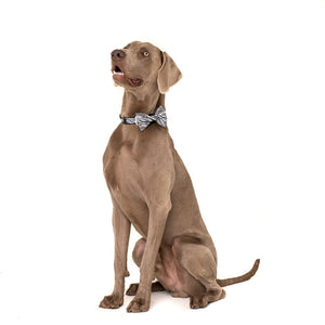 Into The Wild Collar and Bow Tie