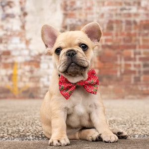 Cherrylicious Collar and Bow Tie
