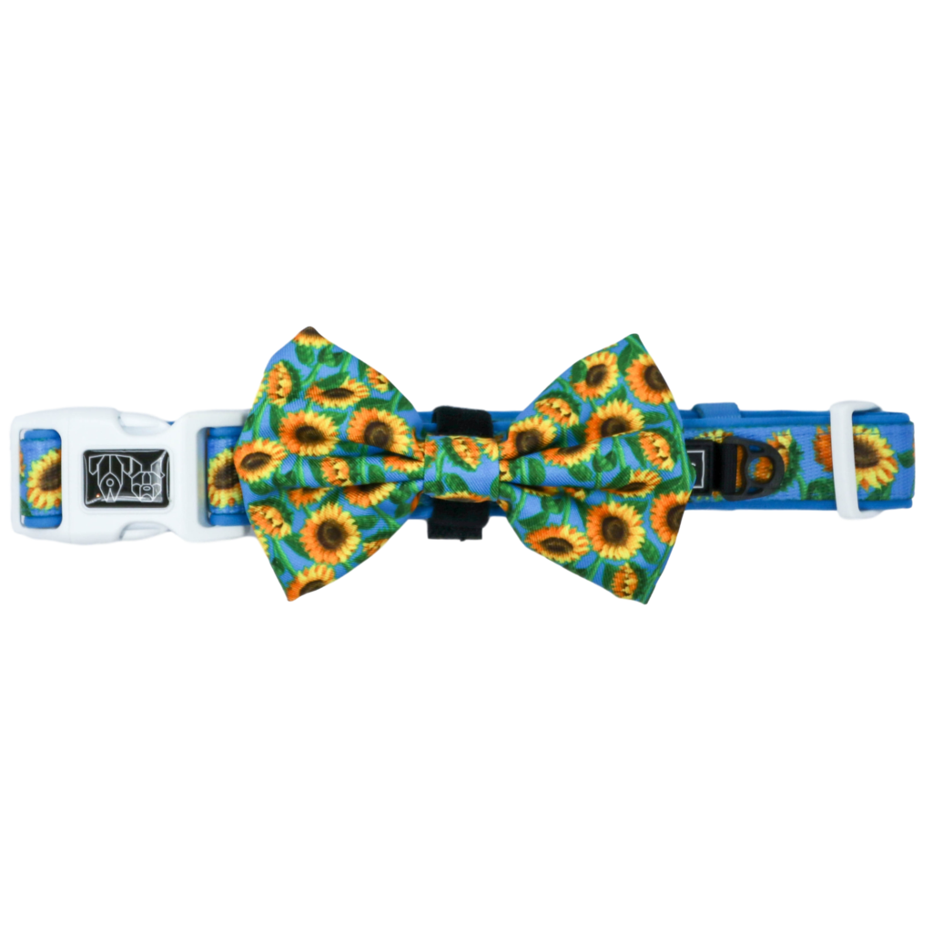 Hello Sunshine Collar and Bow Tie