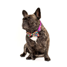 Load image into Gallery viewer, King of Graffiti Collar and Bow Tie