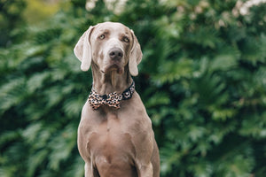 Luxurious Leopard Collar and Bow Tie