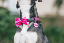 Load image into Gallery viewer, Pink Lightning Collar and Bow Tie