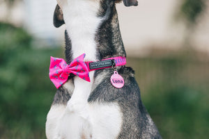Pink Lightning Collar and Bow Tie