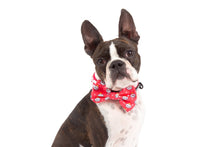 Load image into Gallery viewer, Queen of the Clouds Collar and Bow Tie
