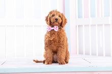 Load image into Gallery viewer, Pink Tie Dye Collar and Bow Tie