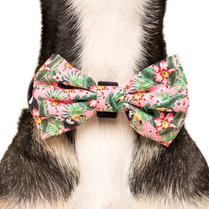 Troppo Toucan Collar and Bow Tie