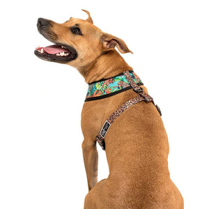 King of the Jungle Dog Harness