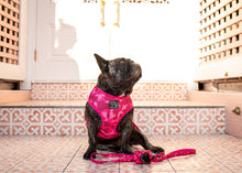 Load image into Gallery viewer, Pink Camo Dog Harness