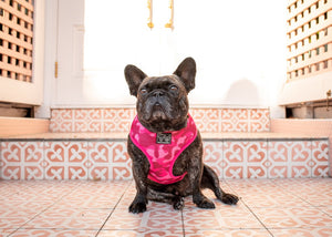 Pink Camo Dog Harness