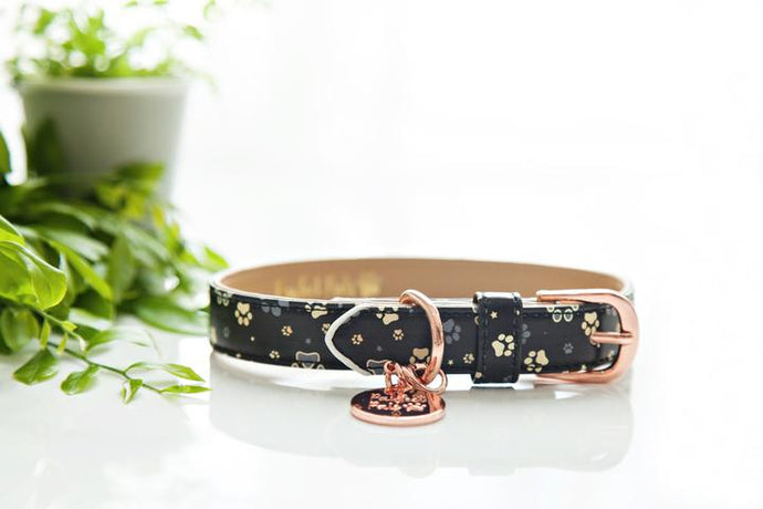 The 'I Love You BEARy Much' Collar