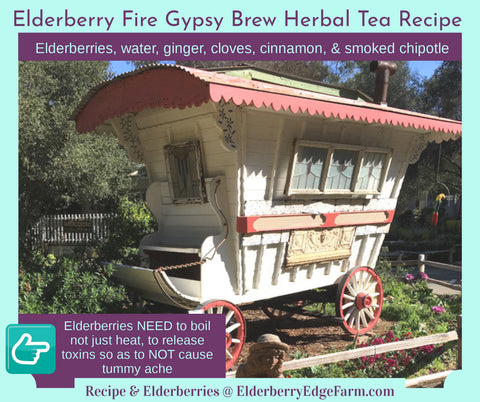 Elderberry Herbal Tea ~ Gypsy Fire Brew Recipe