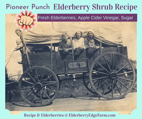 Pioneer Punch Elderberry Shrub Recipe