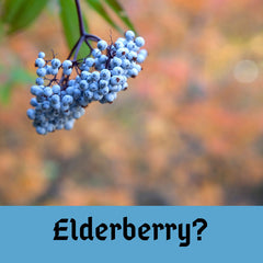Elderberry types