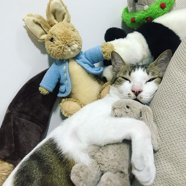 Cat Can't Sleep Without Toy