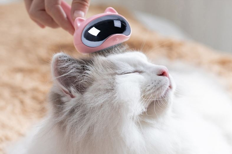 Grooming Your Cat With Daily Brushing