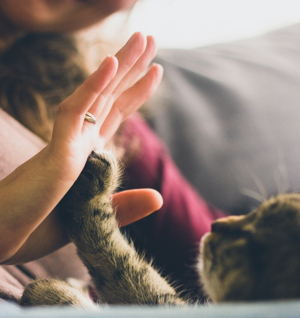 Directions and Tips For Cat Behavior Training