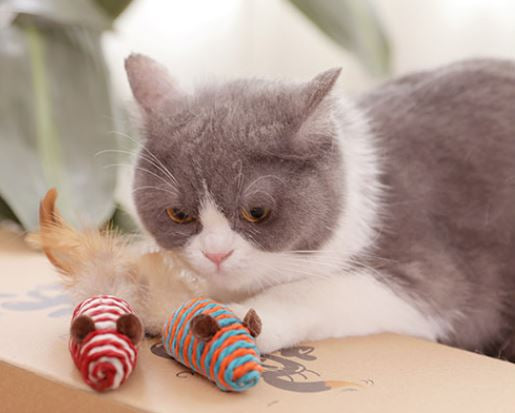 5 Best Benefits of Playing With Your Cat